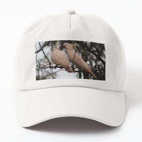 Sulphur-crested Cockatoos preening Dad Hat