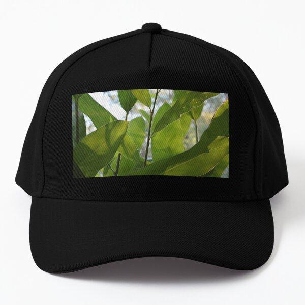 Galangal Leaves in the Tropical Room Baseball Cap