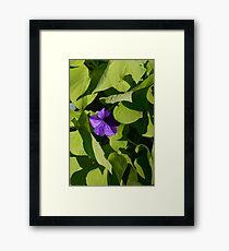 Purple Petunia Framed Print