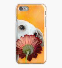 #TheSniffStars - SAFFRON iPhone Case/Skin