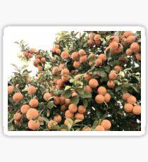 Naranjas en Sevilla Sticker