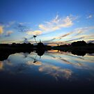 Forest , Tasmania , Australia by phillip wise