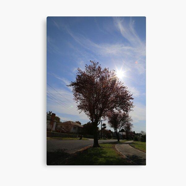 Spring Sunburst Canvas Print