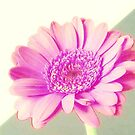Make it a pink gerbera! by bubblehex08