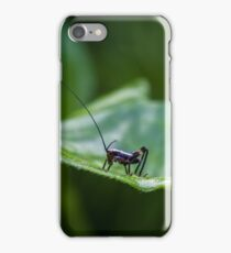 Small black cricket on leaf iPhone Case/Skin