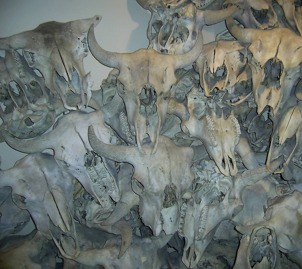 Bison Skull Collection, Head-Smashed-in Buffalo Jump, Alberta, Canada by sbrosszell