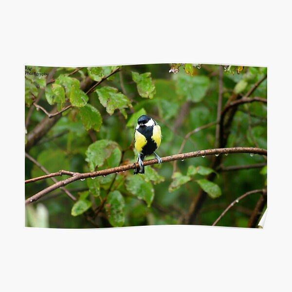 Bird Perching in Rain Poster