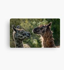 Sweet Llamas Canvas Print