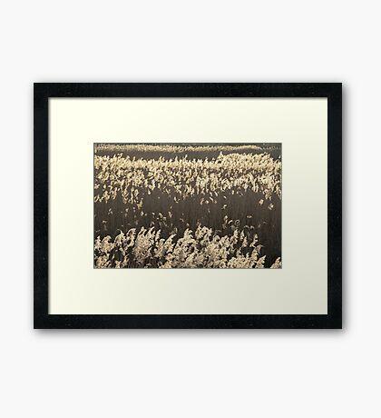 Norfolk Reeds Framed Print