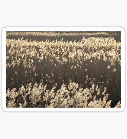 Norfolk Reeds Sticker