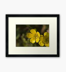 yellow flowers in spring Framed Print
