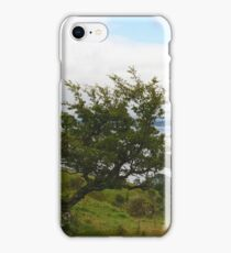 """""""Over a lifetime in the elements upon the Emerald Isle, she bowed and embodied the wind~~~"""" iPhone Case/Skin"""