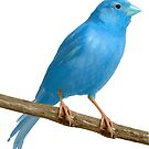 Blue Canary by xBfmVxReapeRx