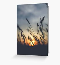 Horizon (Grass and the Sunset) Greeting Card
