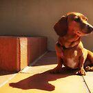 Dot's sunny spot  by Matt Mawson