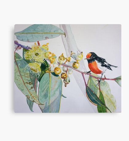 Red Capped Robin with Gum Blossom Canvas Print