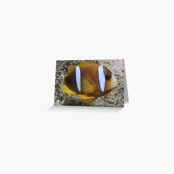 Barrier Reef Anemonefish Greeting Card
