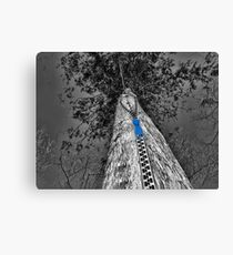 TREE WITH A ZIPPED POINT OF VIEW  Canvas Print