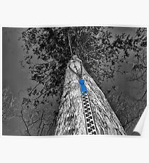 TREE WITH A ZIPPED POINT OF VIEW  Poster