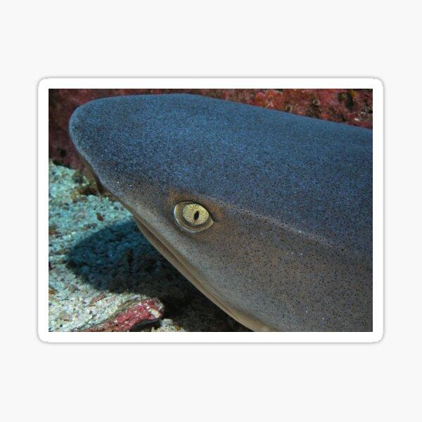 The Eye of a White Tip Reef Shark Sticker