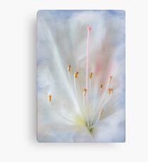 White and Pink Azalea Canvas Print