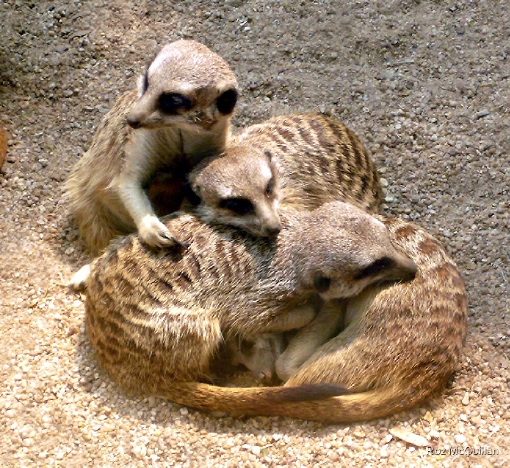 Meercat family by Roz McQuillan