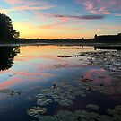 Dusk at Lily pad lake  by Megan Noble