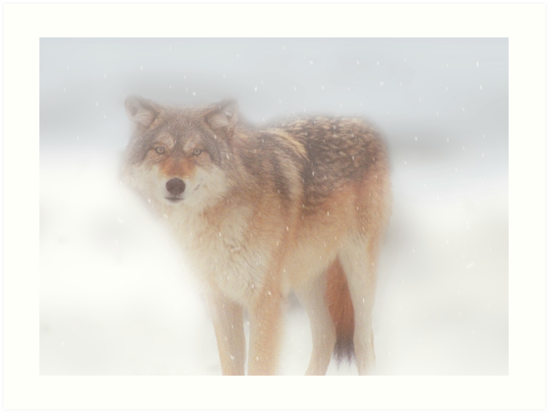 Ghost Wolf by dangerouslyclos