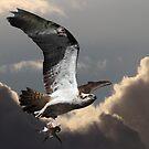 Flying Free by byronbackyard