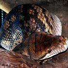 Australian Python by sandysartstudio
