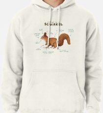 Anatomie eines Eichhörnchens Hoodie