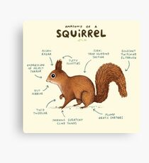 Anatomy of a Squirrel Canvas Print