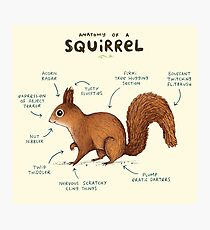 Anatomy of a Squirrel Photographic Print