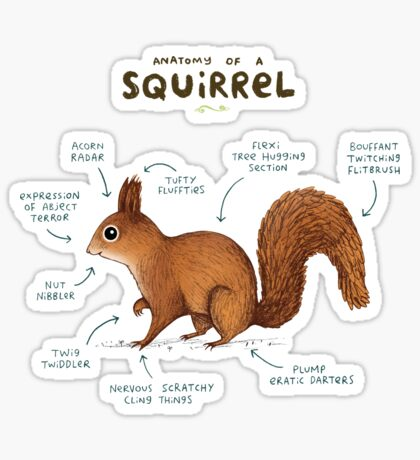 Anatomy of a Squirrel Sticker