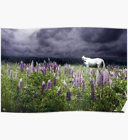 White Horse in a Lupine Storm Poster