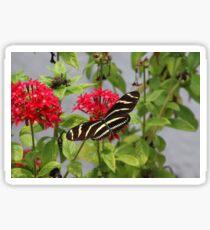ZEBRA LONGWING BUTTERFLY Sticker