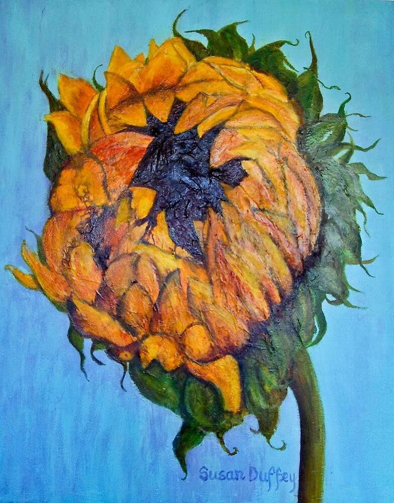 Sunflower Opening by Susan Duffey