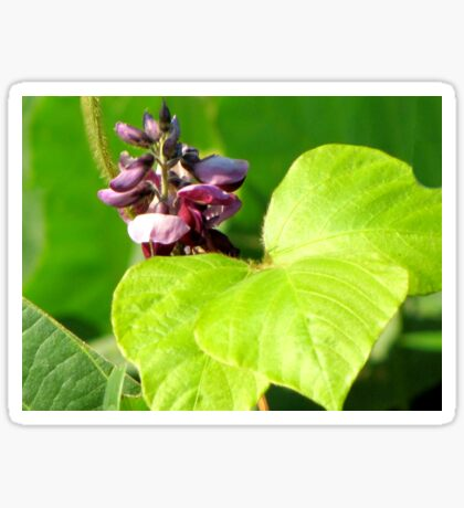 Kudzu - Foot-A-Night Vine Bloom Sticker