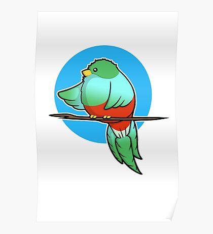 Cute Resplendent Quetzal Poster