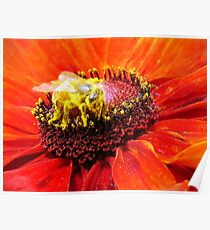 Pollination of Red Flower Poster
