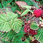 Raspberries by Shulie1