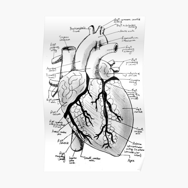 Labeled Heart Poster