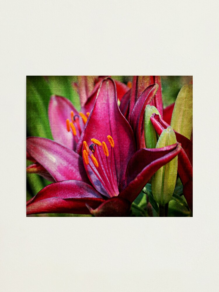 Alternate view of Daylily Photographic Print