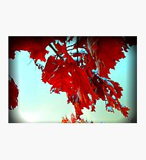 Fall Leaves at Metro Campus Photographic Print
