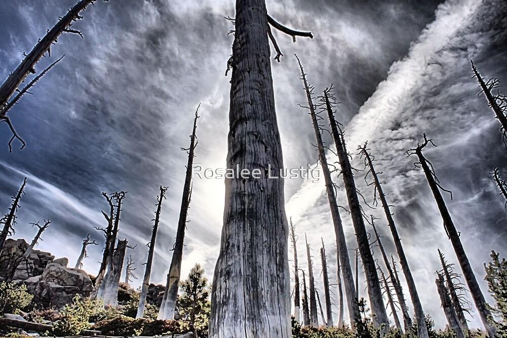 Something Like Apocalypse by Rosalee Lustig