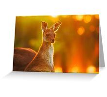 Sunset Joey, Yanchep National Park Greeting Card