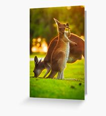 Damn Flies, Yanchep National Park Greeting Card