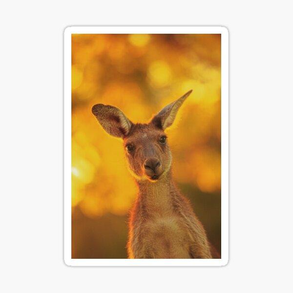 What's Up, Yanchep National Park Sticker