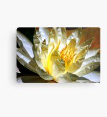White waterlily (Nymphaea odorata rosea) Metal Print