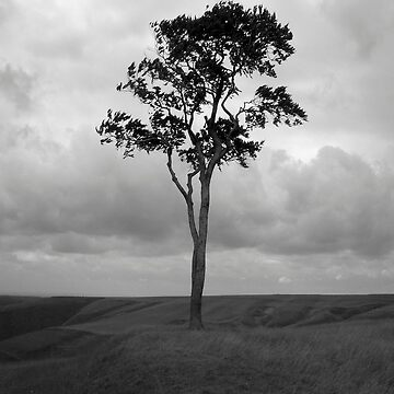Tree by S-Shadowman